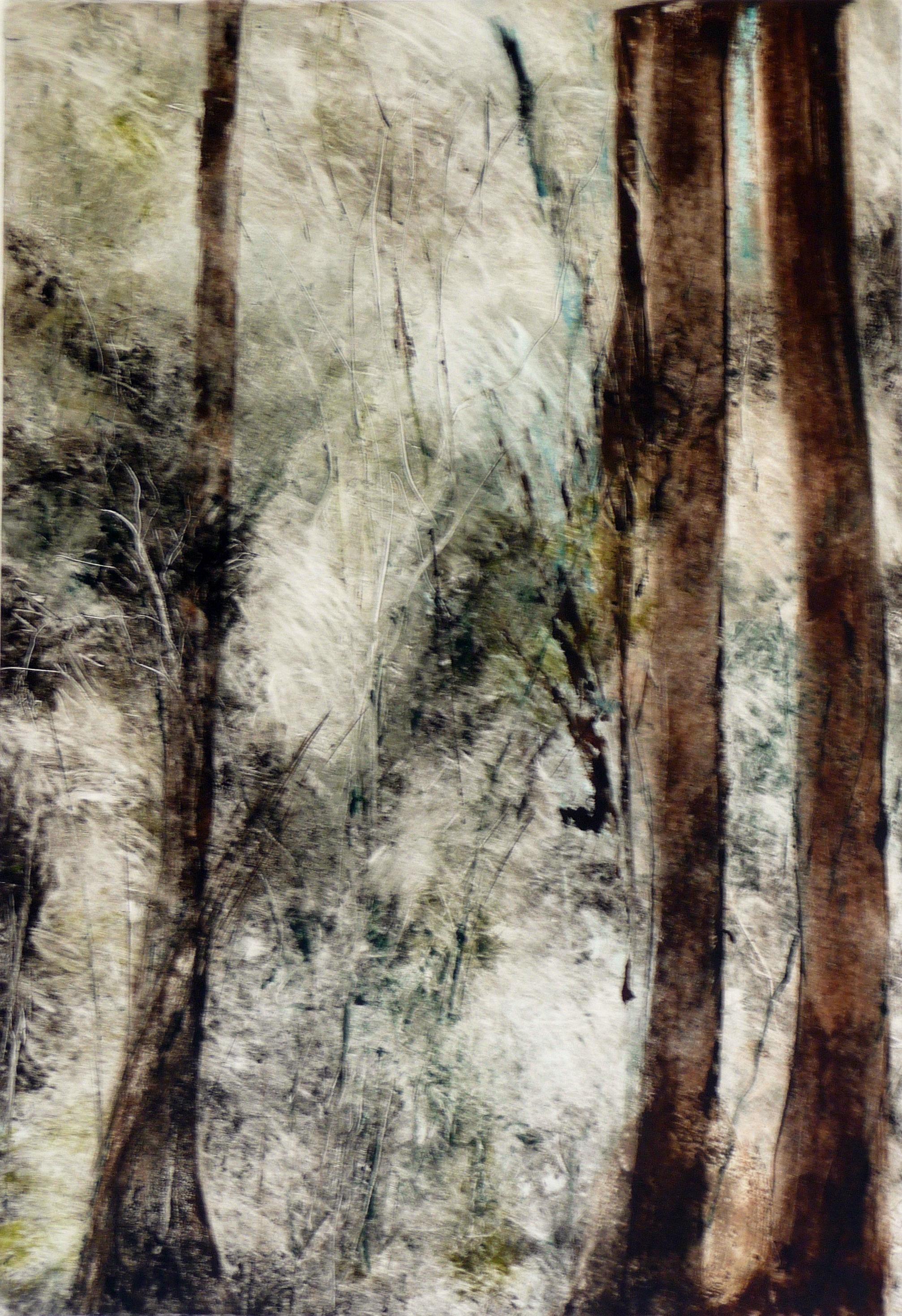 Forrest Soundings 6