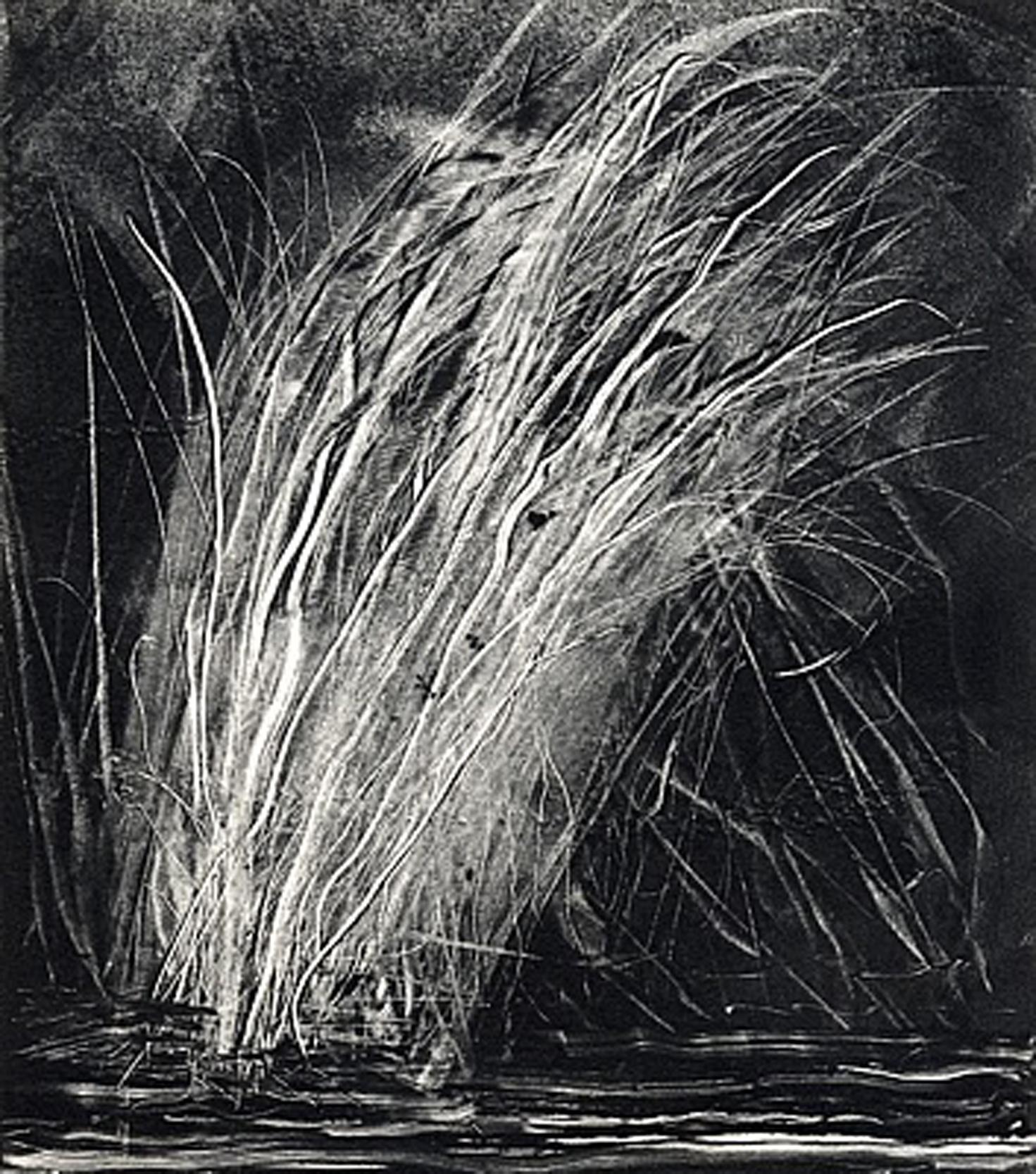 Grasses #0