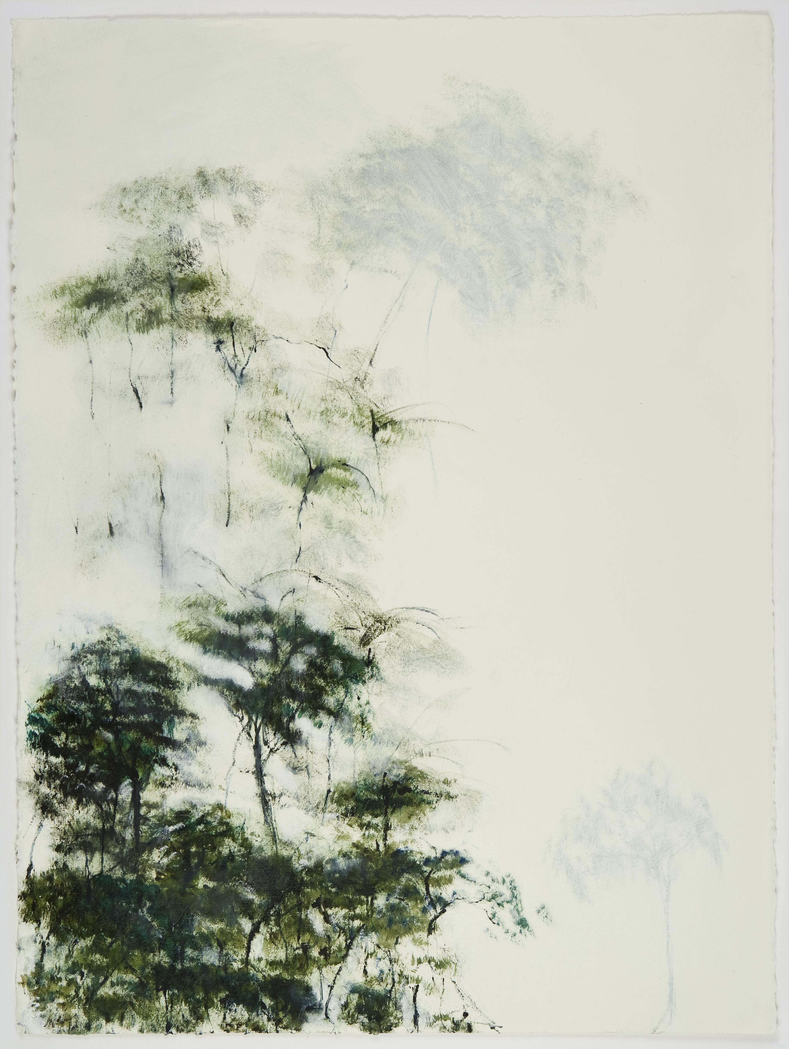 Trees and Fog 1