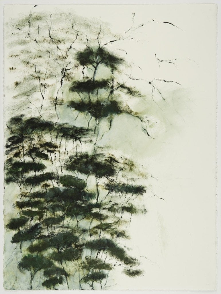 Trees and Fog 3