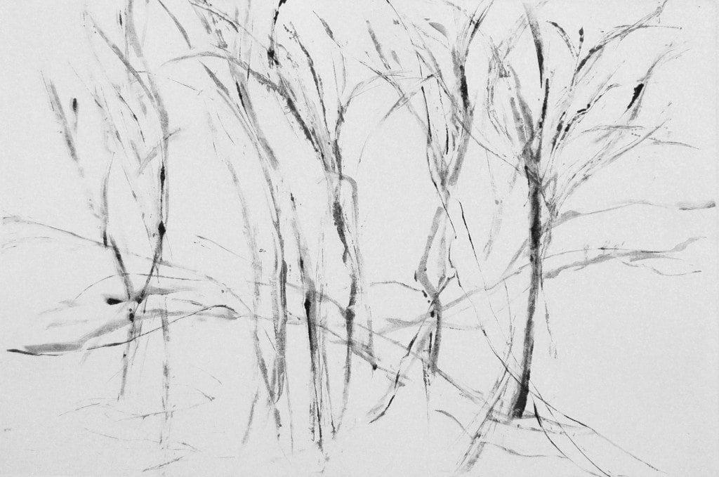 Winter Branching 3